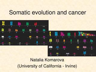 Somatic evolution and cancer