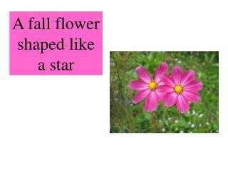 A fall flower shaped like a star