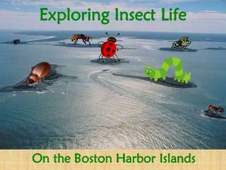 Exploring Insect Life