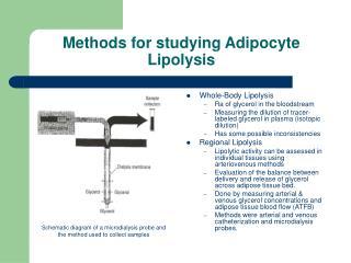 Methods for studying Adipocyte Lipolysis