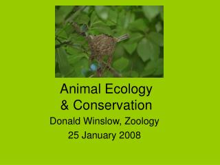 Animal Ecology  & Conservation