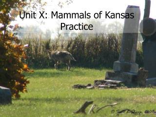 Unit X: Mammals of Kansas Practice