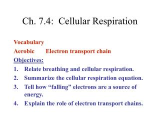 Ch. 7.4:  Cellular Respiration