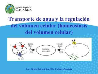 Transporte de agua y la regulaci�n del volumen celular (homeostasis del volumen celular)