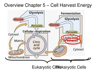 Overview Chapter 5 – Cell Harvest Energy