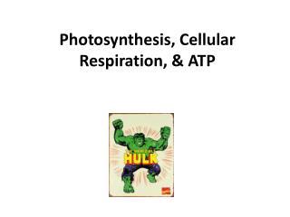 Photosynthesis, Cellular Respiration, & ATP