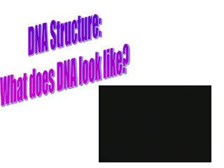 DNA Structure: What does DNA look like?