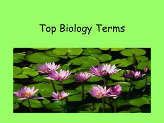 Top Biology Terms