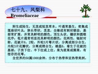 七十九、凤梨科 Bromeliaceae