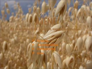 AVENA ( Es de la familia de las gramíneas, monocotiledonea anual)