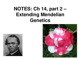 NOTES: Ch 14, part 2 – Extending Mendelian Genetics