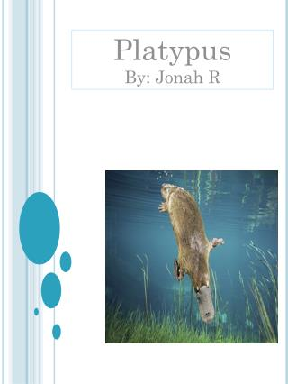 Platypus  By: Jonah R