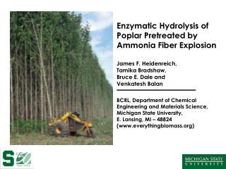 Enzymatic Hydrolysis of Poplar Pretreated by Ammonia Fiber Explosion