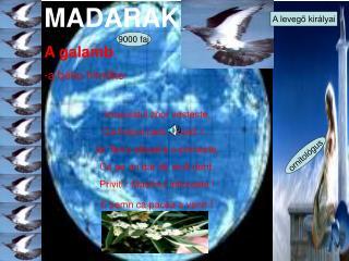 MADARAK A galamb -a  béke hirnöke Imaculatul zbor vesteste, Ca timpul pacii a sosit !...