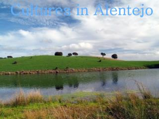 Cultures in Alentejo