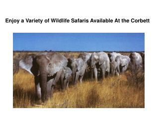 Enjoy a Variety of Wildlife Safaris Available At the Corbett