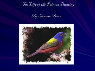 The Life of the Painted Bunting