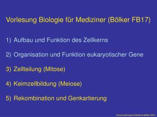 Vorlesung Biologie für Mediziner (Bölker FB17) Aufbau und Funktion des Zellkerns