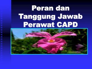Peran dan Tanggung Jawab Perawat CAPD
