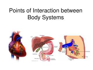 Points of Interaction between  Body Systems