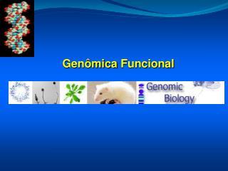 Genômica  Funcional