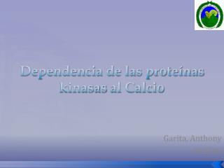 Dependencia de las proteínas  kinasas  al Calcio