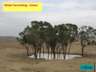 Water harvesting - Liman