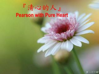 『 清心的人 』 Pearson with Pure Heart