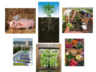 Urban Agriculture - Permaculture and Local Food Systems, 2014 Summer Course 7.5 hp