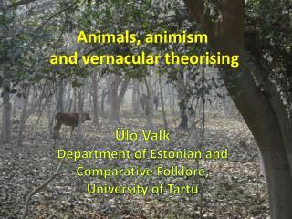 Animals , animism  and  vernacular theorising