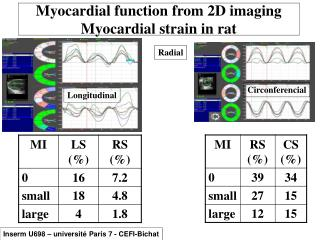 Myocardial function from 2D imaging Myocardial strain in rat