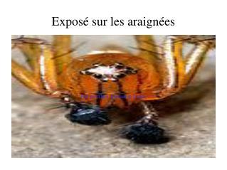 Exposé sur les araignées