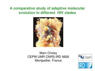 A comparative study of adaptive molecular evolution in different  HIV clades