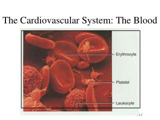 The Cardiovascular System: The Blood
