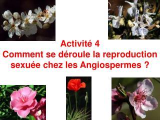 Activité 4  Comment se déroule la reproduction sexuée chez les Angiospermes ?
