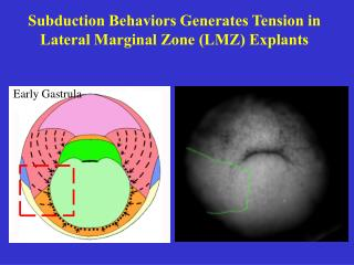 Subduction Behaviors Generates Tension in