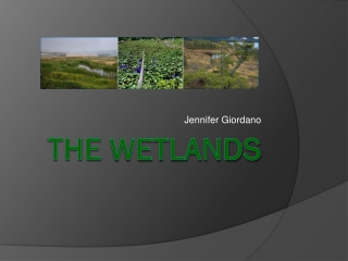 WHAT ARE WETLANDS