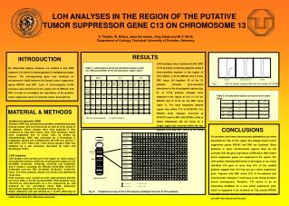 LOH ANALYSES IN THE REGION OF THE PUTATIVE TUMOR SUPPRESSOR GENE C13 ON CHROMOSOME 13
