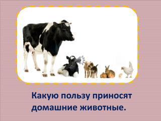 Какую пользу приносят домашние животные.