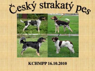 KCHMPP  16.10.2010
