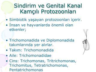 Sindirim ve Genital Kanal Kamçılı Protozoonları
