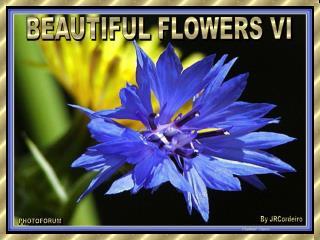 BEAUTIFUL FLOWERS VI