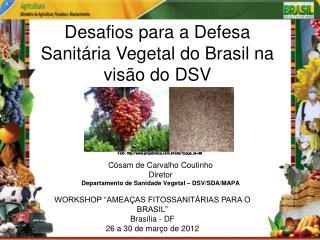Cósam de Carvalho Coutinho Diretor  Departamento de Sanidade Vegetal – DSV/SDA/MAPA