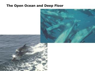 The Open Ocean and Deep Floor