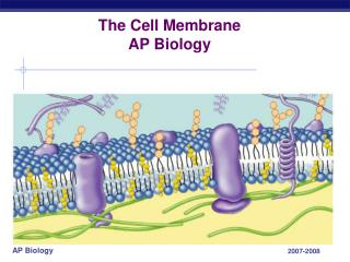 The Cell Membrane AP Biology