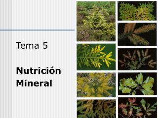 Tema 5 Nutrición Mineral