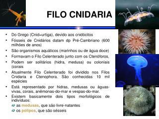 FILO CNIDARIA