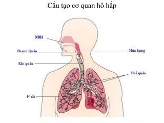Cấu tạo cơ quan hô hấp