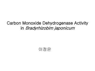 Carbon Monoxide Dehydrogenase Activity in  Bradyrhizobim japonicum