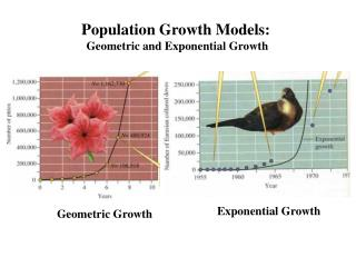 Population Growth Models: Geometric and Exponential Growth
